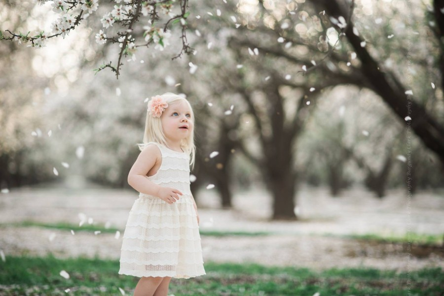 cherry blossom pictures, daily fan favorite