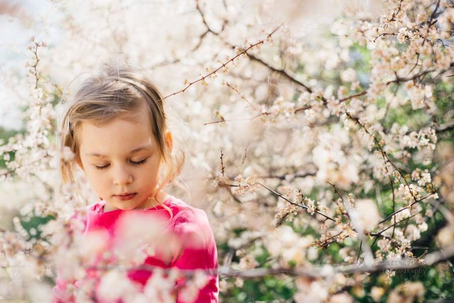 spring flowers, daily fan favorite