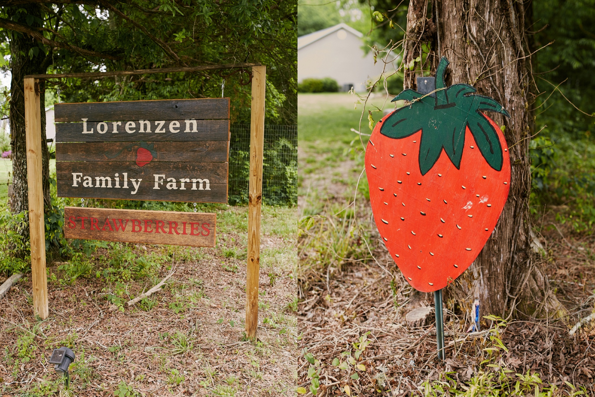 Tennessee Strawberry Field Anniversary Session, engagement session ideas, styled shoots