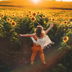 sunflowers, the daily story