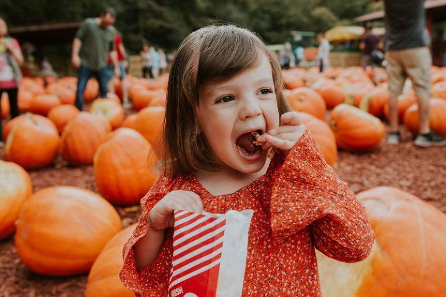 pumpkin patch pictures, daily fan favorite