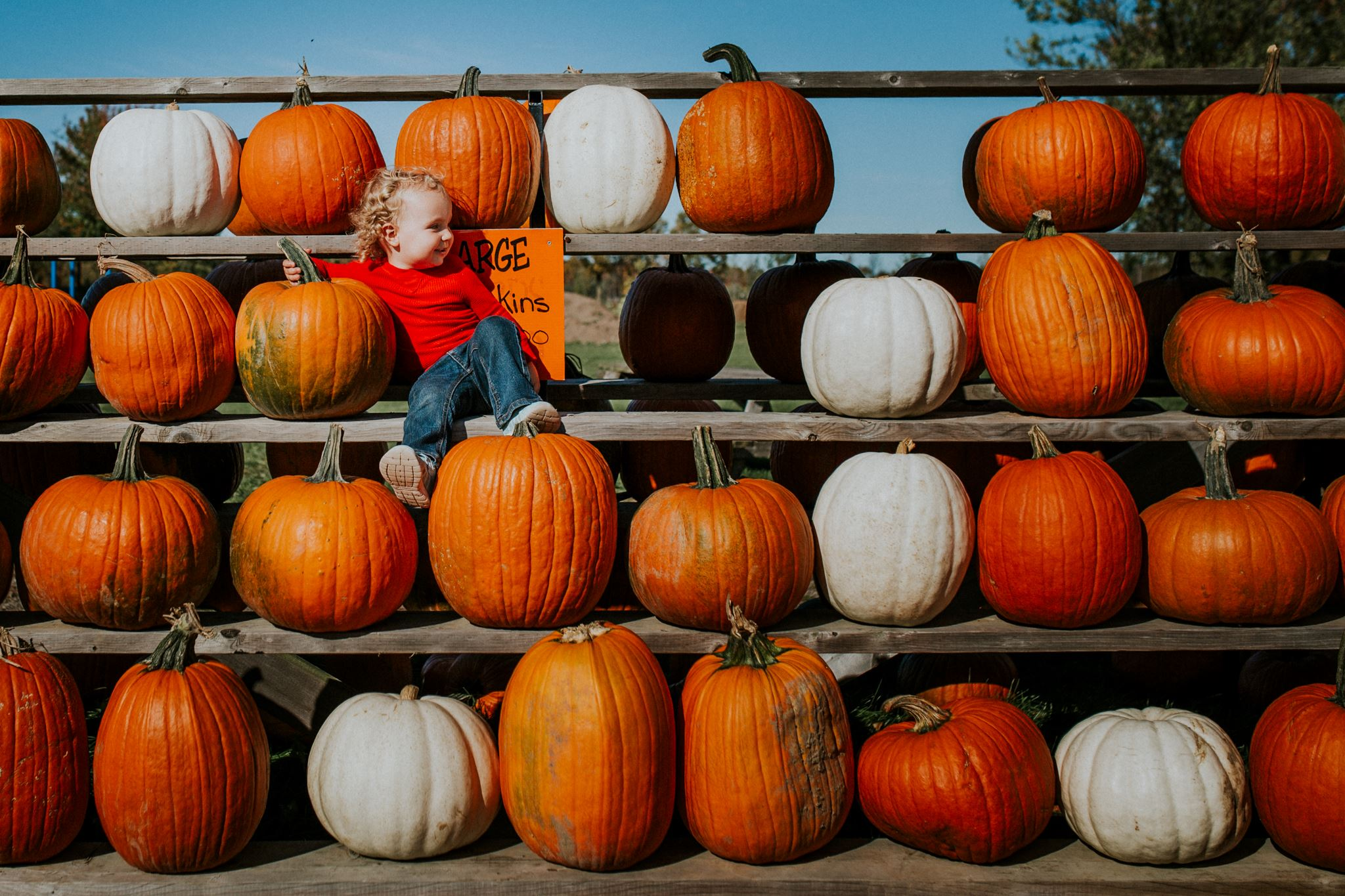 pumpkin patch pictures, the daily story