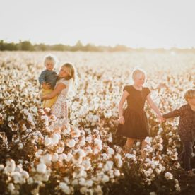 cotton field pictures, the daily story