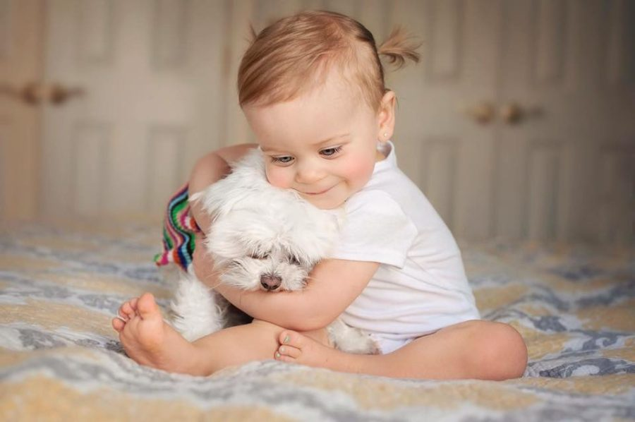 baby pictures with pets, the daily story