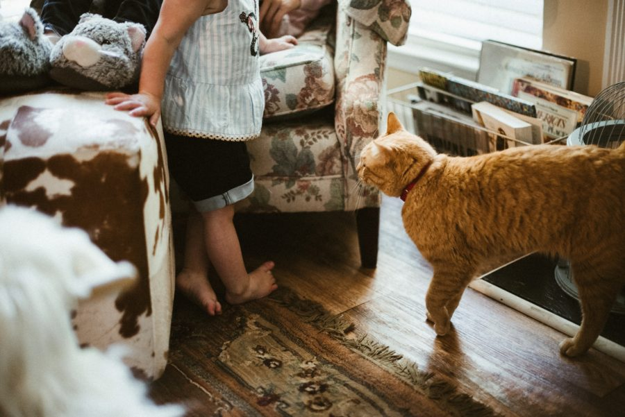 little girl with her cat, In Home Boho Mother and Daughter Session