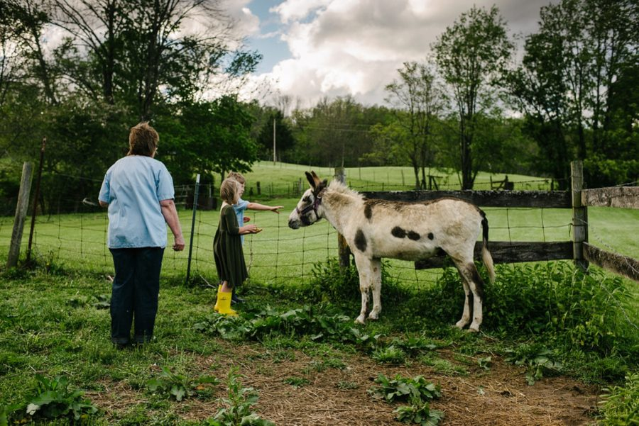 kids feeding donkey, farm pictures with kids, A Day at Grandma and Grandpa