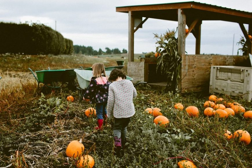 kids finding pumpkins, lifestyle photography, Family Pumpkin Patch Adventure in British Columbia