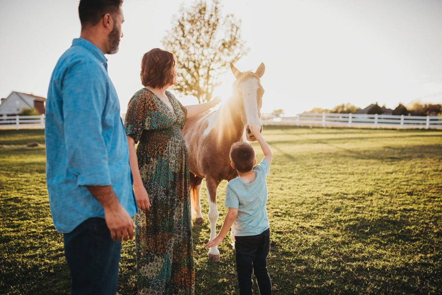 boy touching horse, horse with sunflare, Amanda Dayle Photography Daily Fan Favorite