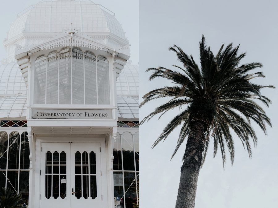 Outside Conservatory of Flowers, Palm tree, Edgy Styled Wedding Portraits in San Francisco