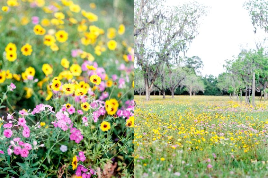 Wildflower field, Hampton Florida, Engagment posing inspiration, Organic Engagement Pictures in Florida Wildflower Field