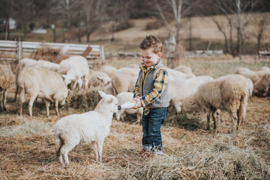 Boy bottle feeding a lamb, baby lamb drinking from bottle, Daily Fan Favorite on Beyond the Wanderlust