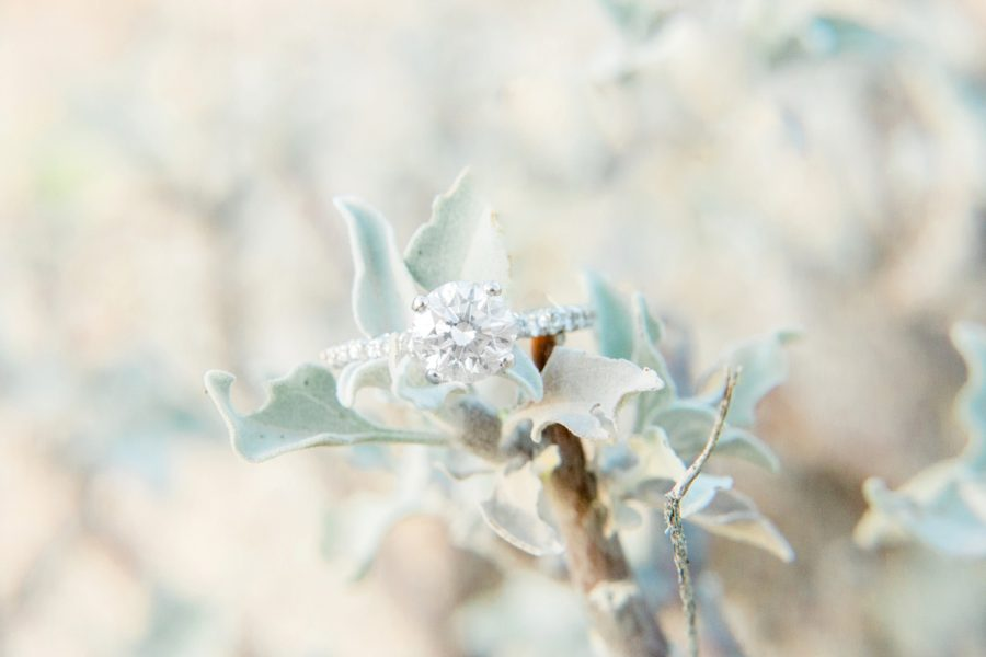 Detail shot of ring on tree branch, Close up of engagement ring, Canyon Lake Engagement Pictures in Arizona