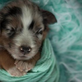 Puppy swaddled like newborn, Ella Eve Photography Daily Fan Favorite