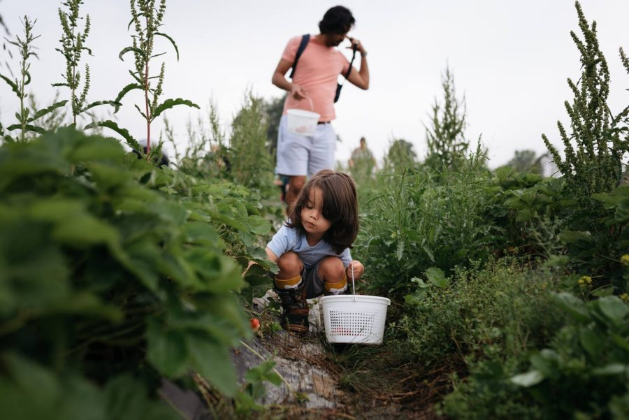 Boy in garden picking produce, Daily Fan Favorites on Beyond the Wanderlust