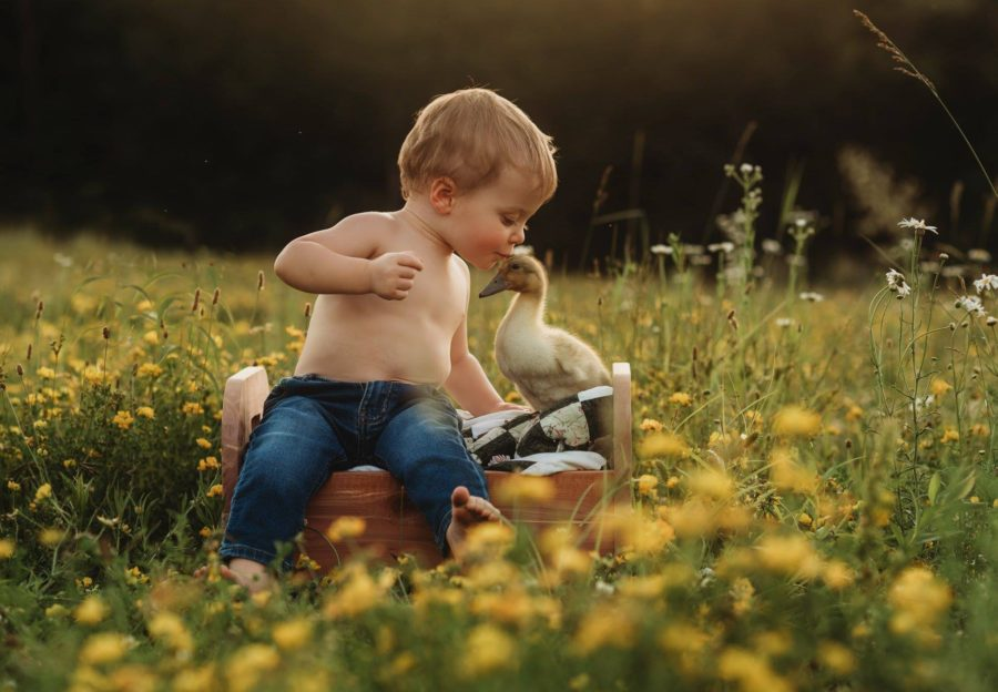 Boy kissing a duck in flower field, Daily Fan Favorite on Beyond the Wanderlust