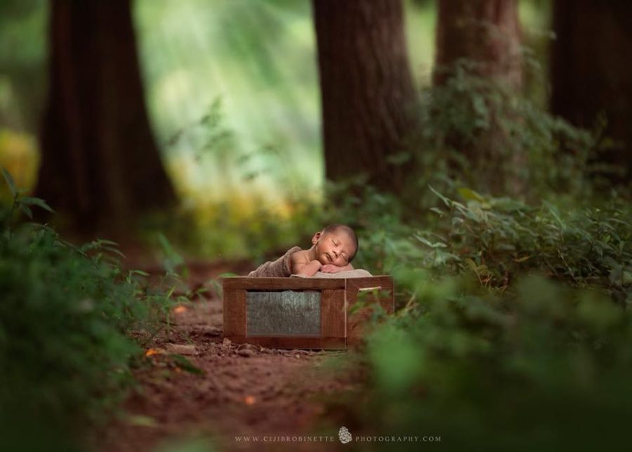 newborn sleeping in box in woods, Ciji B Robinette Photography - Daily Fan Favorite