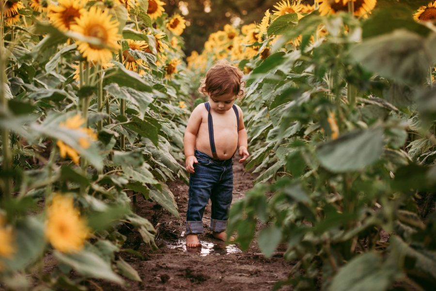 Baby standing between rows of sunflowers in jeans and suspenders, Kelly Conley Photography Daily Fan Favorite