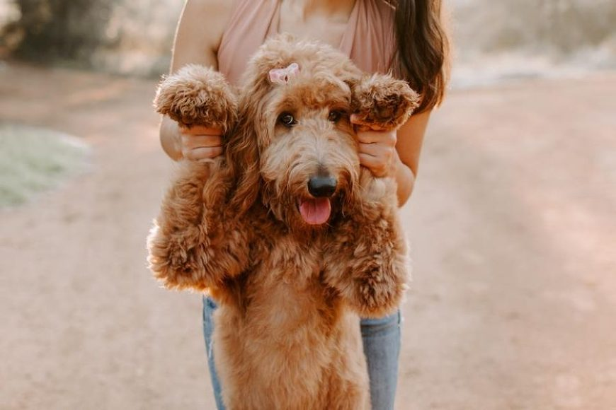 Girl holding up dog by arms, Local Nomad Photography Daily Fan Favorite