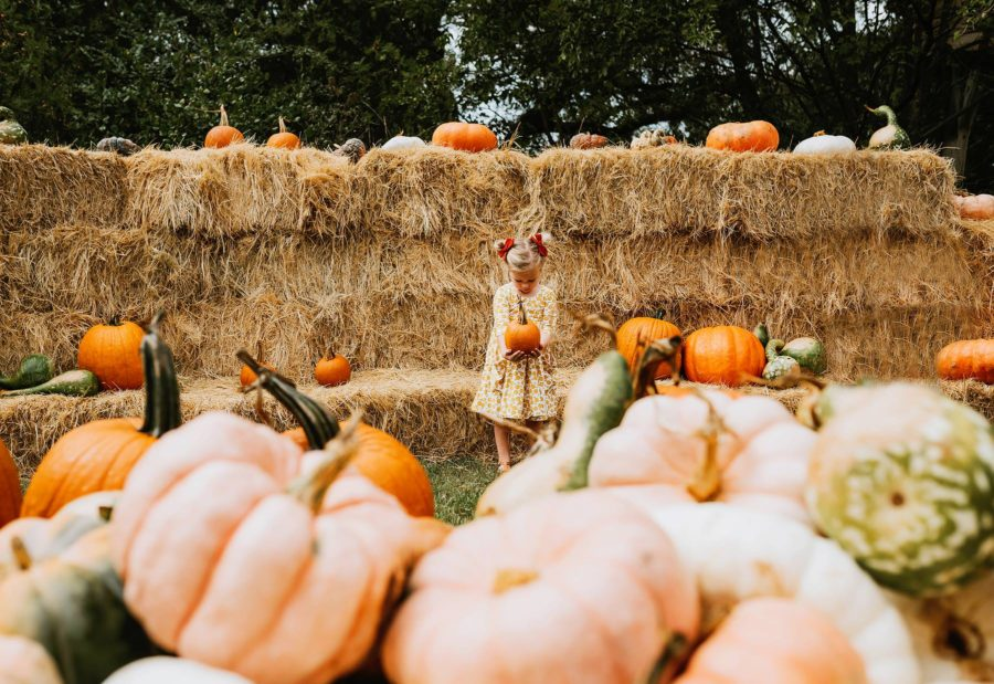 fall pumpkin pictures, little girl at pumpkin patch, fall fashion